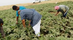 Photo of بنك التنمية الإفريقي يحث على ابتكار وسائل لتحسين الإنتاج الزراعي في القارة