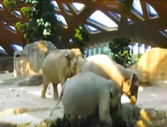 بالفيديو مواقف طريفة للحيوانات
