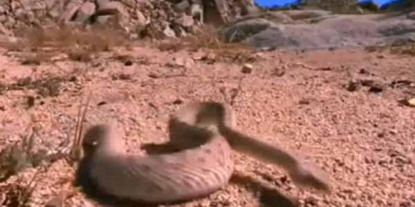 فيديو : مواجهات الافاعى والحيوانات داخل الغابات