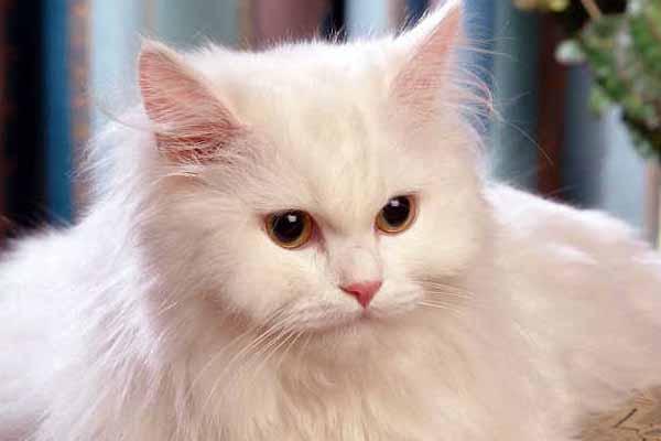 Photo of بالفيديو.. لقطات طريفة لردات فعل القطط