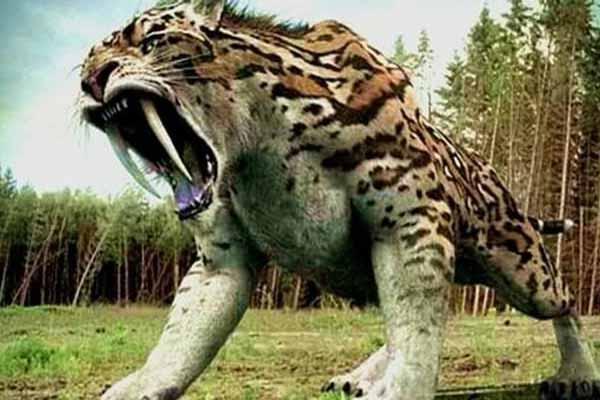Photo of أغرب عمليات تزاوج الحيوانات في التاريخ