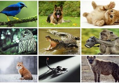 حيوانات