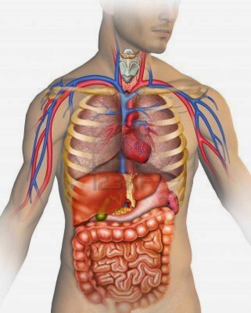 جسم الإنسان