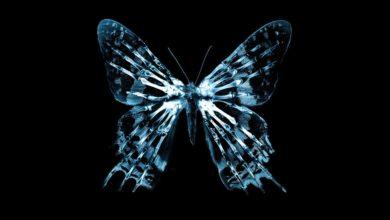 Photo of «الفراشة» تجعل سكان العالم في مرمى نيران فيروس «كورونا»