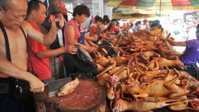 Photo of لأول مرة.. الصين تحظر أكل الكلاب والقطط بسبب «كورونا»