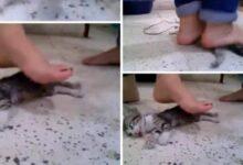 Photo of قصة فيديو تعذيب القطة حتى الموت الذي أبكى السوشال ميديا