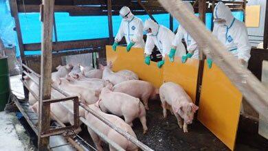 Photo of مرض جديد في الصين من 3 فيروسات.. وتحذير من تحوله لجائحة