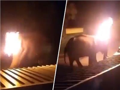 اشتعال النيران في فيل