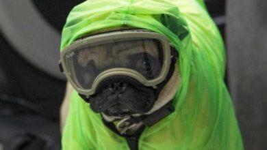 Photo of دراسة: الكلاب يمكنها اكتشاف فيروس كورونا في أقل من ثانية واحدة