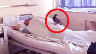 Photo of حمامة تقف فوق مريض في المستشفى كل يوم وعند معرفة السبب صدم الجميع !!! سبحان الله