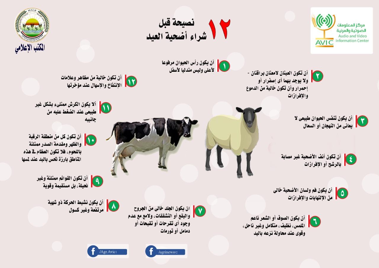 إنفوجراف يوضح 12 نصيحة قبل شراء أضحية العيد