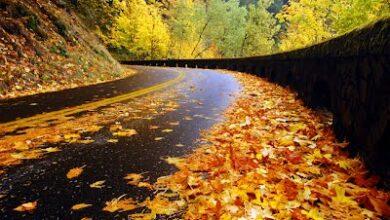 Photo of منهم «نسيم الهوا» لفيروز.. 6 أغاني تساعدك على الاسترخاء في فصل الخريف